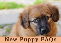 New Puppy FAQs