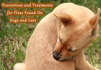 Preventives and Treatments for Fleas Found On Dogs and Cats