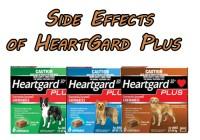 Side Effects of Heartgard Plus- JAN. 2020 Updated