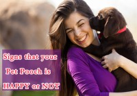 Signs that your Pet Pooch is Happy or Not