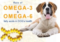 Role of Fatty Acids in Dogs Health
