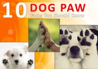 Dog Paw Facts