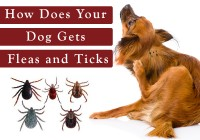 flea&tick