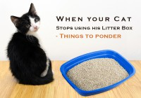 When your Cat Stops using his Litter Box - Things to ponder.....