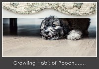 Growling Habit Of Pooch On Bed
