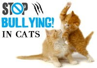 Bullying in Cats - Resolving the Social Conflict