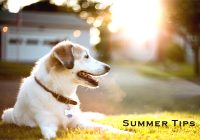 Tips To Keep Dog Safe In The Heat