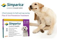 simparica flea and ticks treatment