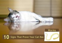 signs of worms in cats