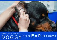 treating dog's ear problem
