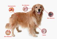 Doggy Diseases To Watch Out For In Canines