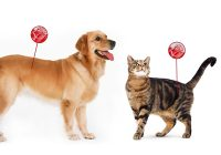 How Do I Know If My Pet Has Worms?