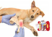 Use First Aid For Your Pet In Tough Situations