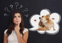 FAQs About Choosing Flea & Tick Preventative Treatment