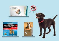 Options to Treat Heartworm Disease in Pets