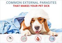 Parasites That Makes Your Pet Sick