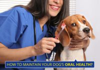 how-to-clean-a-dogs-mouth