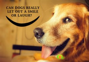 Do-dogs-smile-and-laugh
