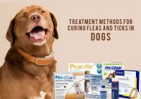 Flea-and-tick-treatment-methods