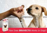 How-Bravecto-works