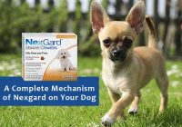 Complete-Mechanism-of-Nexgard-on-Dog