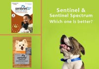Sentinel-or-Sentinel-Spectrum-Which-one-to-choose
