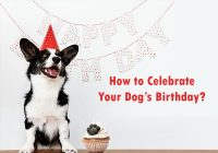 dog's-birthday-celebration-ideas