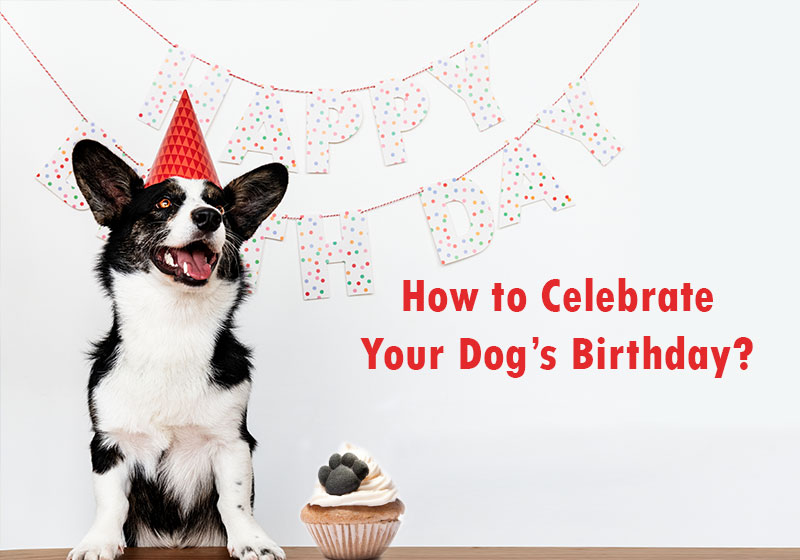 dog's-birthday-celebration-ideas
