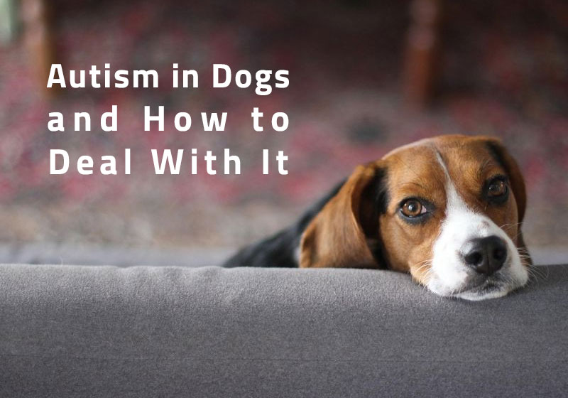 Autism-in-Dogs
