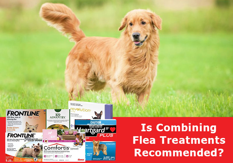 Combining-Flea-Treatments