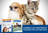 program-for-cats-and-dogs