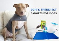 Dog-gadgets-for-tech-savvy-dog-owners