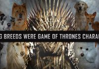 Dog-breeds-as-games-of-thrones-characters