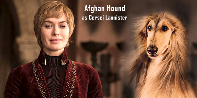 Afghan-Hound-as-Cersei-Lannister