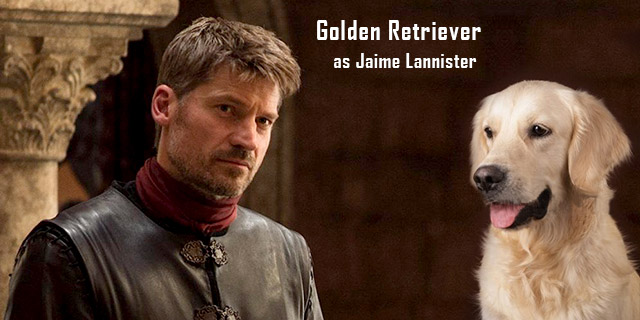 Golden-Retriever-as-Jaime-Lannister