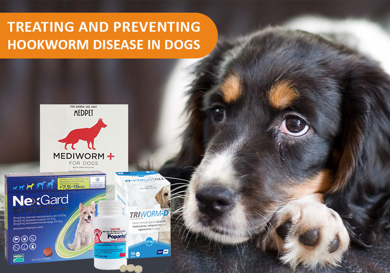 Preventing Hookworm in dogs