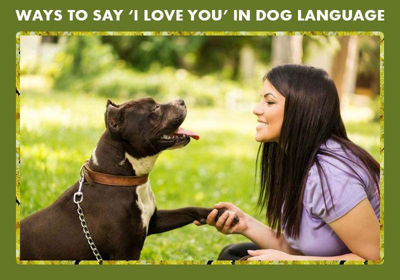 Dog langauge