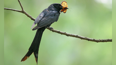 Insectivorous Birds/ Insect Eating Birds