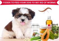 Foods to Feed Your Dog to Get Rid of Worms