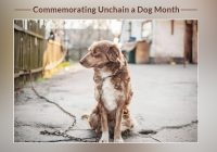 Commemorating Unchain a Dog Month 2020