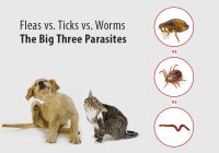 Fleas vs. Ticks vs. Worms: The Big Three Parasites