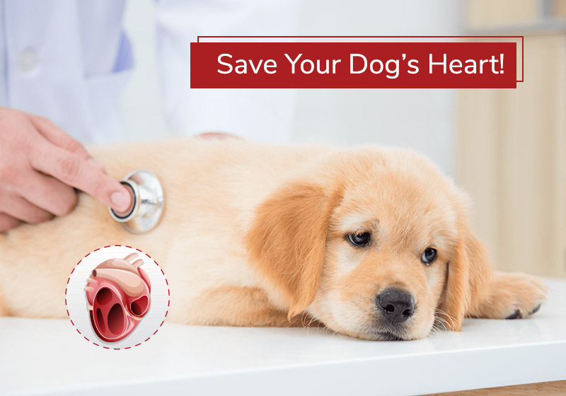 Save your Dog's Heart