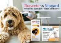 Nexgard vs Bravecto