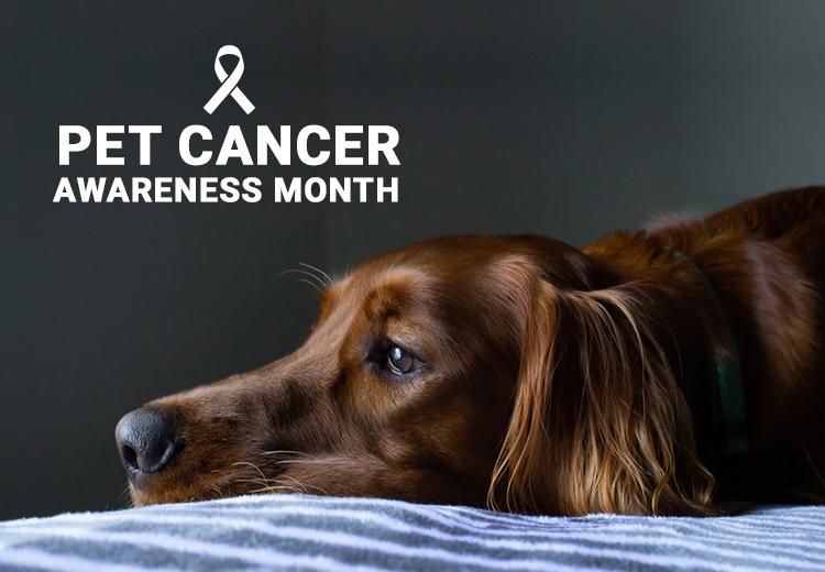 Pet Cancer Month