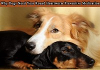 Why Dogs Need Year Round Heartworm Preventive Medication
