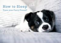 how to sleep puppy