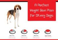 Dog's weight gaining tips