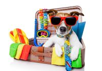 tips on traveling with pets during holiday seasons