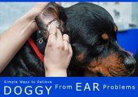 treating dog's ear problem