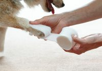 Guide To Treat Dog Wounds At Home